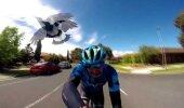 VIDEO | Rattur on vana rahu ise, kui lind teda korduvalt rünnata püüab