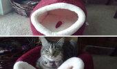 GALERII: Naljakad näited kasside loogikast