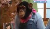 VIDEO: Mustkunstitrikid ajavad ahvi väga segadusse