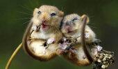 GALERII | Kui armas! Kõige kaunimad loomafotod, mis väljendavad jäägitut sõprust ja armastust
