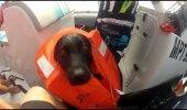 VIDEO: Koer ujub koos delfiinidega