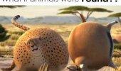 VIDEO: Vaata, missugused näeksid välja loomad, kui nad oleksid hoopis ümmargused