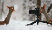 ARMAS GALERII: Vene fotograaf jäädvustas imeilusad hetked oravatega