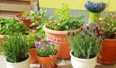 Toataimede feng shui | Milline taim valida, et kodus oleks hea energia?
