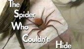 Ämbliku elu