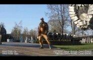 ВИДЕО: Звезды советского брейк-данса устроили видеофлешмоб