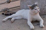 VIDEO: Taim, mis ajab kassi rohkem pöördesse kui palderjan või naistenõges