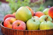 Kümme põhjust, miks tasub alanud õunahooaega nautida ja iga päev õuna süüa