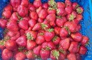 Nõmme turu hitiks on lilletaimed ja kohalikud hiigelmaasikad