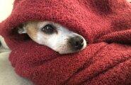 Lumemöll ja miinuskraadid: kas sinu koer vajab sooja talvejopet?