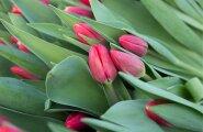Lillekasvatajad ja lillemüüjad