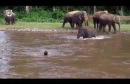 VIDEO: Tõeline kangelane! Elevant nägi uppuvat meest ja sööstis teda päästma
