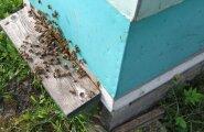 Mesilased vapsikute vastu