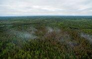 SÜNGED KAADRID: Vaata, mida nägi 45 hektari põlenud metsa kohal vaatluslendu teinud droonikaamera