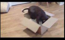 HUUMOR: Vaat kus lops! See koer on küll sündinud vales kehas - tema arvab, et on hoopis kass!