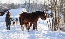 Metsikud hobused on aastaid naabrite valdusi rüüstanud