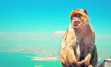Maailma lõpus ootavad aplad ahvid