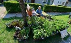 DELFI VIDEO ja FOTOD TÜRI LILLELAADALT: Vaata, milliste hindadega taimi laadal müüakse!