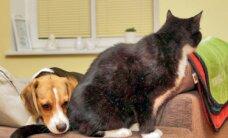 Kas kassi ja koera sõprus on võimalik?