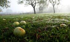 Hiiumaal kutsutakse avatud talude päeval õunaaeda kaema