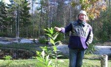 Metsavahi ametist unistanud mees rajab Hiiumaal eksootilist aeda
