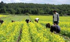 Riik tahab kärpida laste töötamise piiranguid