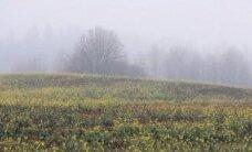 Novembri neljas nädal: tähistaeva silmad külvavad hinge tormi