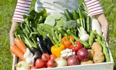 Millal on õige aeg köögivilja koristada?