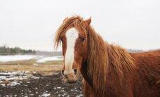 Lugeja: vanaema lätlasest naabrinaine teadis ussisõnu ja ravis leivaga hobuse jala terveks
