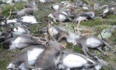 ВИДЕО: В Норвегии от удара молнии погибли 323 оленя