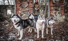 Kaks noort eestlast pürgivad Lapimaa ekstreemsele kelgukoertega matkale
