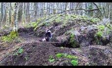 Vaata koos RMK looduskaameraga pisipere ootel mägrapaari