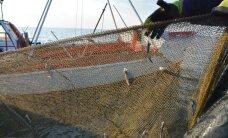 Pomerants: leppisime kaluritega kokku silmasuuruse alandamises, samal ajal koha alammõõtu tõstes