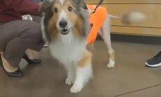 Uskumatu lugu: loomaarst avastas koera halvatuse põhjuse mõni hetk enne eutaneerimist