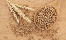 Miks on maheviljakasvatajate lemmik spelta parem kui tavaline nisu?