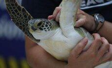 Roomav üllatus: kilpkonnadel ei tekkinudki kilp selleks, et end vaenlaste eest kaitsta