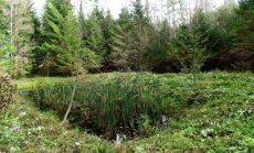 Leili metsalood: Inimese ja looduse võidujooks