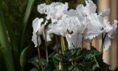 Hortes. Sügisesed lillekompositsioonid