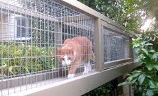 FOTOD: Sel moel võid kassi riskivabalt õue hängima lubada