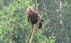 Leili metsalood: Loodusvaatlused