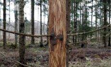 Olenevalt piirkonnast on ka Eestis põdrakahjustused metsaomanikele tõsine probleem, mille nahka läheb hektarite kaupa potentsiaalset palgimetsa.