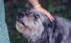 6 ohumärki, mis võivad viidata sellele, et koeral on kirbud