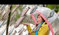 В Мексике прошел рыбный дождь