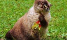 Seitse levinud kasside lemmikmänguasja, mis võivad neile hoopis lämbumisohtu kujutada!
