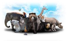 Põnev TEST: Vaata järele, milline loom Sa eelmises elus olla võisid