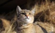 Kas sinu lemmikloomal on müstilised võimed?