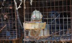 Loomasõbralikuma tuleviku nimel: Jaapanis suleti viimane allesjäänud karusloomafarm