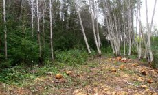 Leili metsalood: Koridoridesse istutamisel pole mõtet