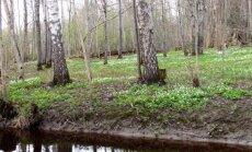 Leili metsalood: Aprill lõpeb võsaülastega