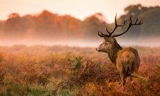 Осень: самые красивые фотографии со всего мира